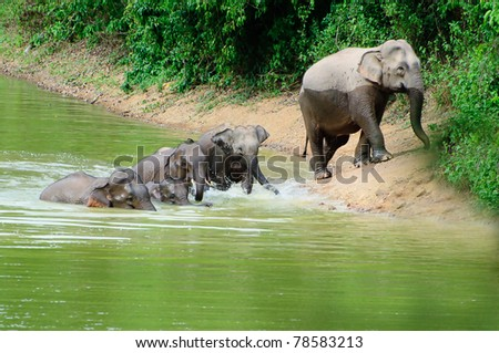 Family of Asian elephants bathing in the tropical forest - stock photo