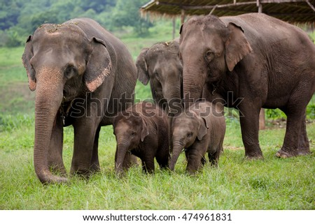 Family of baby elephant in river.
