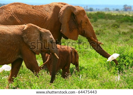 Family of elephants. Kenya. Samburu national park. - stock photo