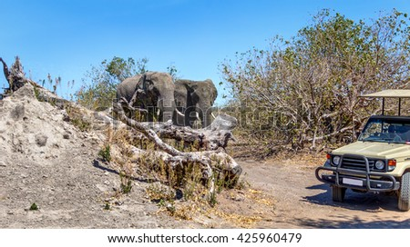 Family of elephants met on the road with a car of tourists in african savannah in the National Park Chobe - Botswana, , South-West Africa - stock photo