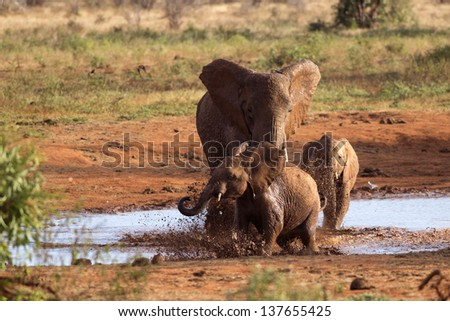 Family of elephants playing in the red mud - stock photo