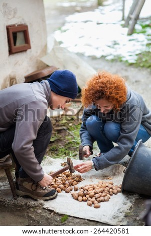 Family of farmers crushing walnuts outdoor with hammers - stock photo