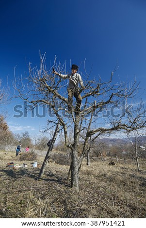 Family of farmers trimming trees and spring cleaning in an orchard