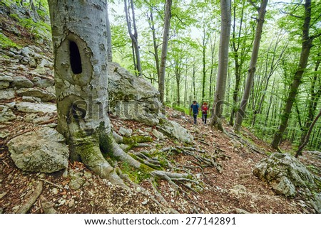 Family of hikers on a mountain trail through the beech forest - stock photo