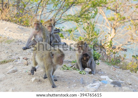 Family of macaque monkeys sitting on sea shore