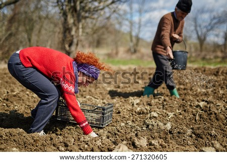 Family of peasants planting potatoes into plowed soil