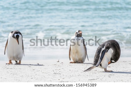 Family of peguins on the coast of the ocean
