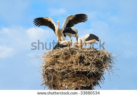 Family of storks on a nest - stock photo