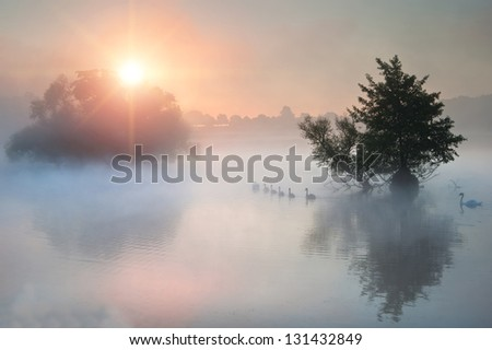 Family of swans swim across misty foggy Autumn Fall lake at sunrise - stock photo