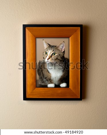 Family pet cat portrait in a wooden frame on wall. Simple decor element portrays importance of pets. - stock photo