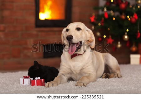 Family pets receiving gifts for Christmas - dog a kitten with small presents - stock photo
