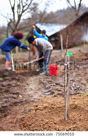 Family planting trees, focus on the foreground baby tree, the people are in blur in background - stock photo