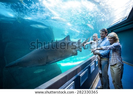 Family pointing a shark in a tank at the aquarium - stock photo