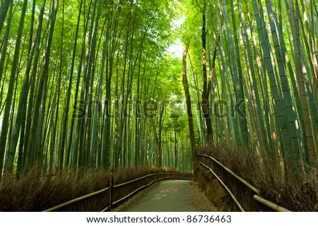 Famous bamboo grove at Arashiyama, Kyoto - Japan - stock photo