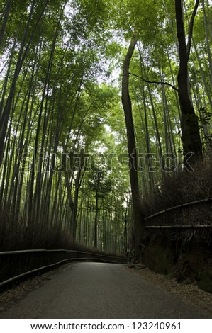Famous bamboo grove at Arashiyama, Kyoto - Japan, near the famous Tenryu-ji temple. Tenryuji is a Zen Buddhist temple which means temple of the heavenly dragon and is a World Cultural Heritage Site. - stock photo