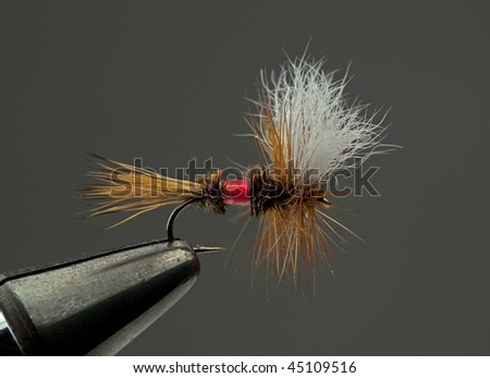 Famous dry fly called a Royal Wulff - stock photo