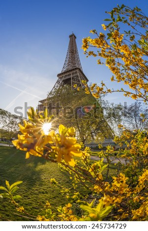 Famous Eiffel Tower with spring tree in Paris, France
