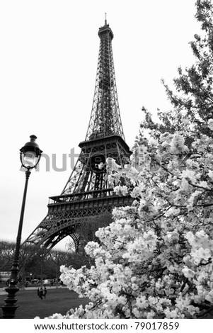 Famous Eiffel Tower with spring tree, Paris, France - stock photo