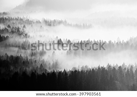 Famous spring weather  in nature  within inversion. Treetops increased from creamy fog.Black and white photo - stock photo