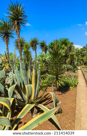 Famous tropical botanical gardens in Funchal town, Madeira island, Portugal  - stock photo