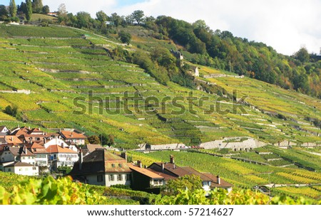 Famous vineyards in Lavaux region, Switzerland - stock photo