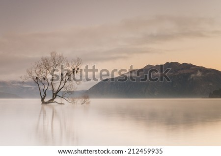 famous Wanaka lone tree at sunrise, New Zealand - stock photo