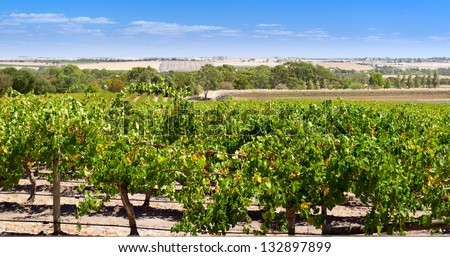 Famous wine region the Barossa Valley near Adelaide, South Australia - stock photo
