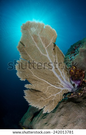 Fan coral against sun rays and blue sky - stock photo
