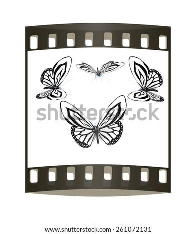 fancy butterflies. The film strip - stock photo