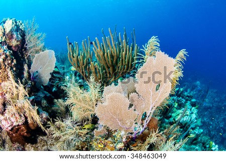 Fans and corals on a colorful reef - stock photo