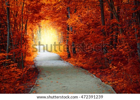 Fantastic Autumn forest with path and magical light, fall fairytale landscape