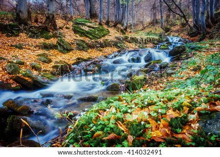Fantastic carpet of yellow leaves in the forest glowing sunlight. Dramatic scene and picturesque picture. Location place Carpathian, Ukraine, Europe. Beauty world. Soft filter. Warm toning effect. - stock photo