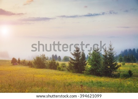 Fantastic day with fresh blooming hills in warm sunlight. Dramatic and picturesque morning scene. Location place: Carpathian, Ukraine, Europe. Artistic picture. Beauty world. Soft filter effect.
