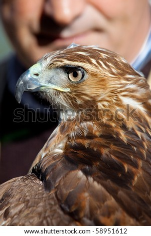 Fantastic eagle of red tail (Buteo jamaicensis) posing placidly with the falconer