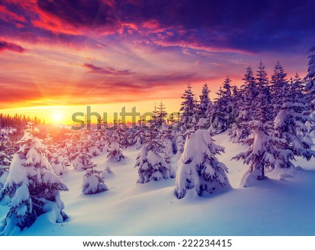 Fantastic evening landscape glowing by sunlight. Dramatic wintry scene. Natural park. Carpathian, Ukraine, Europe. Beauty world. Retro filter. Instagram toning effect. Vivid violet. Happy New Year! - stock photo