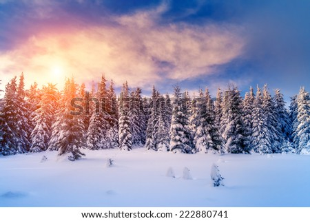 Fantastic evening landscape glowing by sunlight. Dramatic wintry scene. Natural park. Carpathian, Ukraine, Europe. Beauty world. Retro filter. Instagram toning effect. Happy New Year! - stock photo