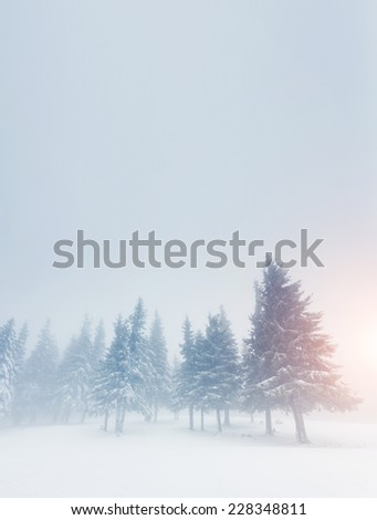 Fantastic landscape glowing by sunlight. Dramatic wintry scene. Carpathian, Ukraine, Europe. Beauty world. Happy New Year! - stock photo