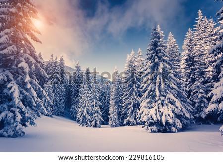 Fantastic landscape glowing by sunlight. Dramatic wintry scene. Carpathian, Ukraine, Europe. Beauty world. Retro filter. Instagram toning effect. Happy New Year! - stock photo