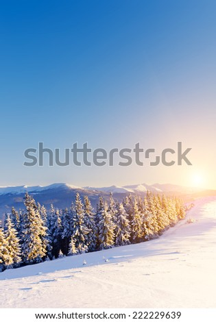 Fantastic landscape glowing by sunlight. Dramatic wintry scene under blue sky. Carpathian, Ukraine, Europe. Beauty world. Retro filter. Instagram toning effect. Happy New Year! - stock photo
