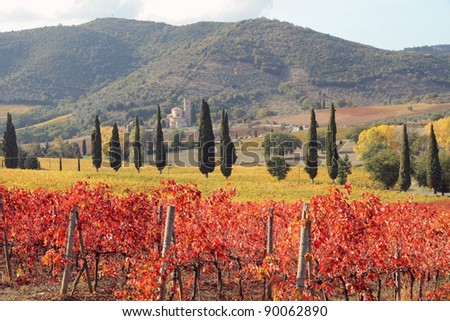 fantastic landscape of tuscan vineyards in autumn, at horizon St. Antimo Abbey ,Castelnuovo dell'Abate,region of famous red italian wine Brunello di Montalcino,  Italy, Europe - stock photo
