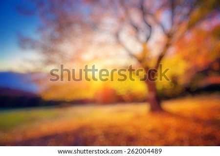 Fantastic morning scene. Red and yellow autumn leaves. Retro filtered. Beauty world. Natural blurred background. Soft light effect.  - stock photo