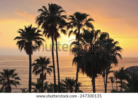 Fantastic ocean sunset with palm trees. - stock photo