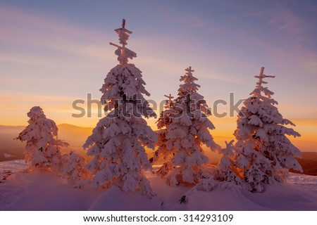 Fantastic orange evening landscape glowing by sunlight. Dramatic wintry scene with snowy trees. Kukul ridge, Carpathians, Ukraine, Europe. Merry Christmas! - stock photo
