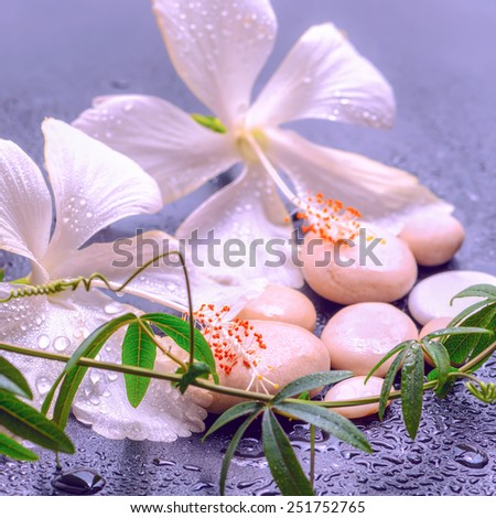 fantastic spa concept of delicate white hibiscus, twig passionflower and stones on background with drops, closeup  - stock photo