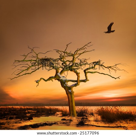 Fantastic story about returning home. Evening. A sunset. The bird flies to a nest located on a freakish tree.
