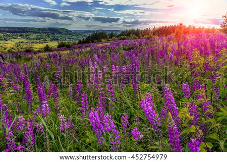 fantastic sunny day. overcast sky with clouds. over the mountain valley. Pink lupine flowers in the foreground. picturesque scene. breathtaking scenery. original creative images