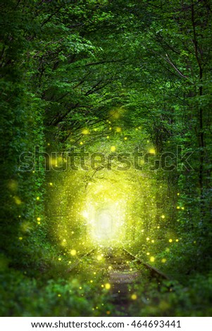 Fantastic Trees Scene- Tunnel of Love with fairy light afar, magic background