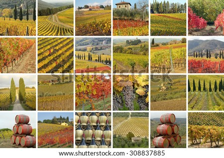fantastic tuscan vineyards in autumnal colors - many images composition, Italy - stock photo
