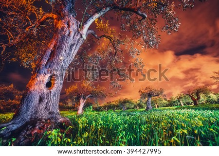 Fantastic views of the garden under the moonlight. Mediterranean climate. Dramatic and picturesque scene. Location: Sicily island, cape Milazzo, Italy, Tyrrhenian sea. Artistic picture. Beauty world.  - stock photo