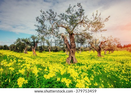 Fantastic views of the garden with blue sky. Gorgeous and picturesque scene. Location Sicily island, Italy, Europe. - stock photo